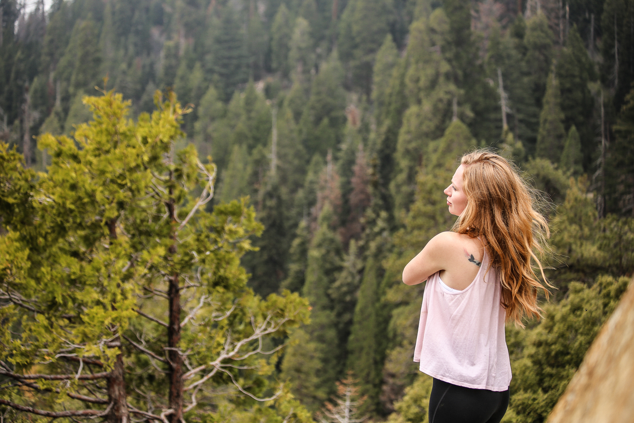 Sequoia_May2017-8247.jpg