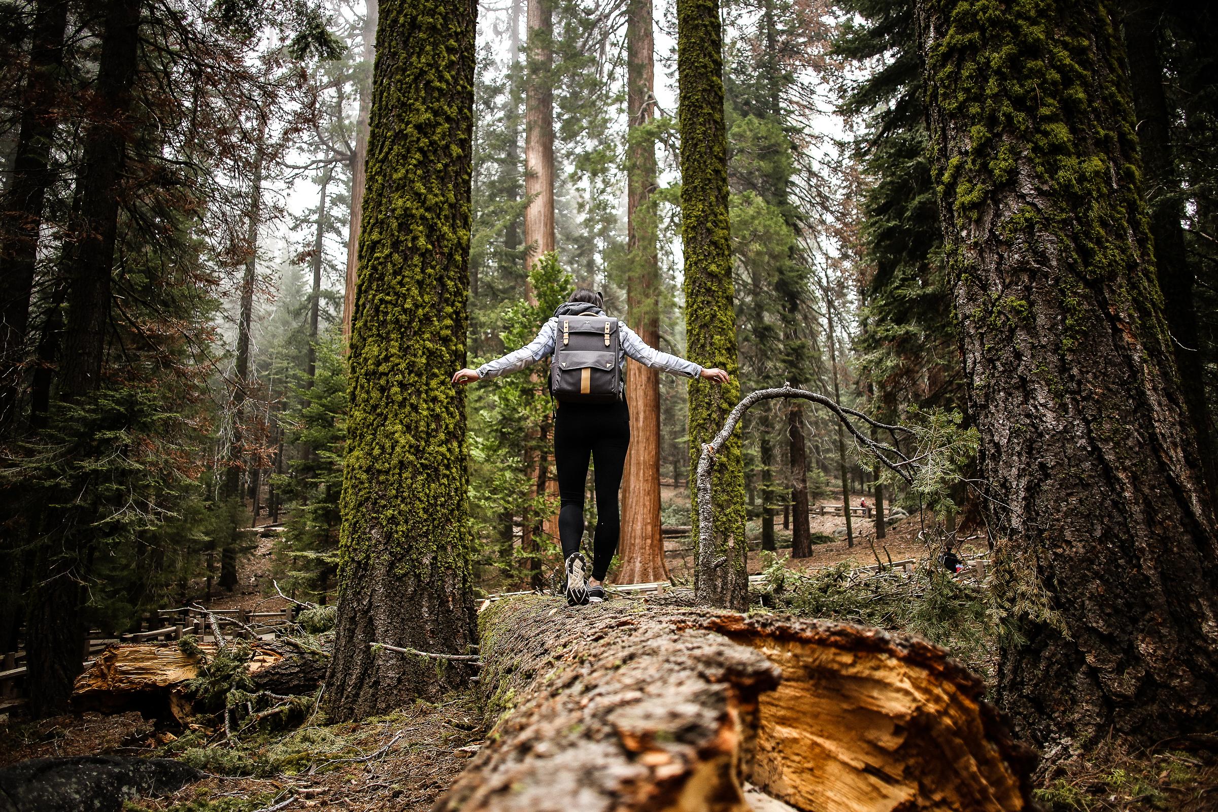 Sequoia_May2017-8315.jpg
