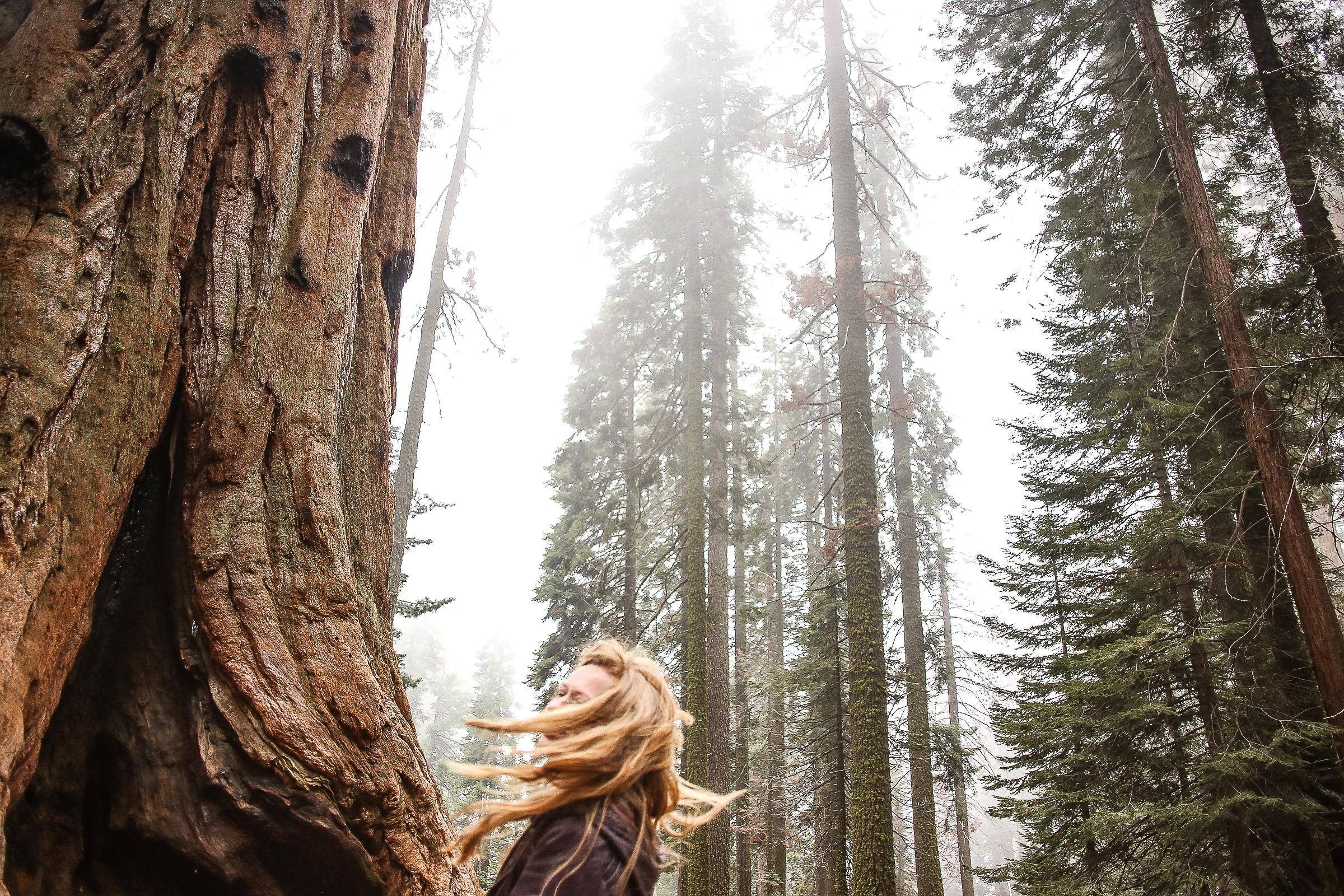 Sequoia_May2017-8328.jpg