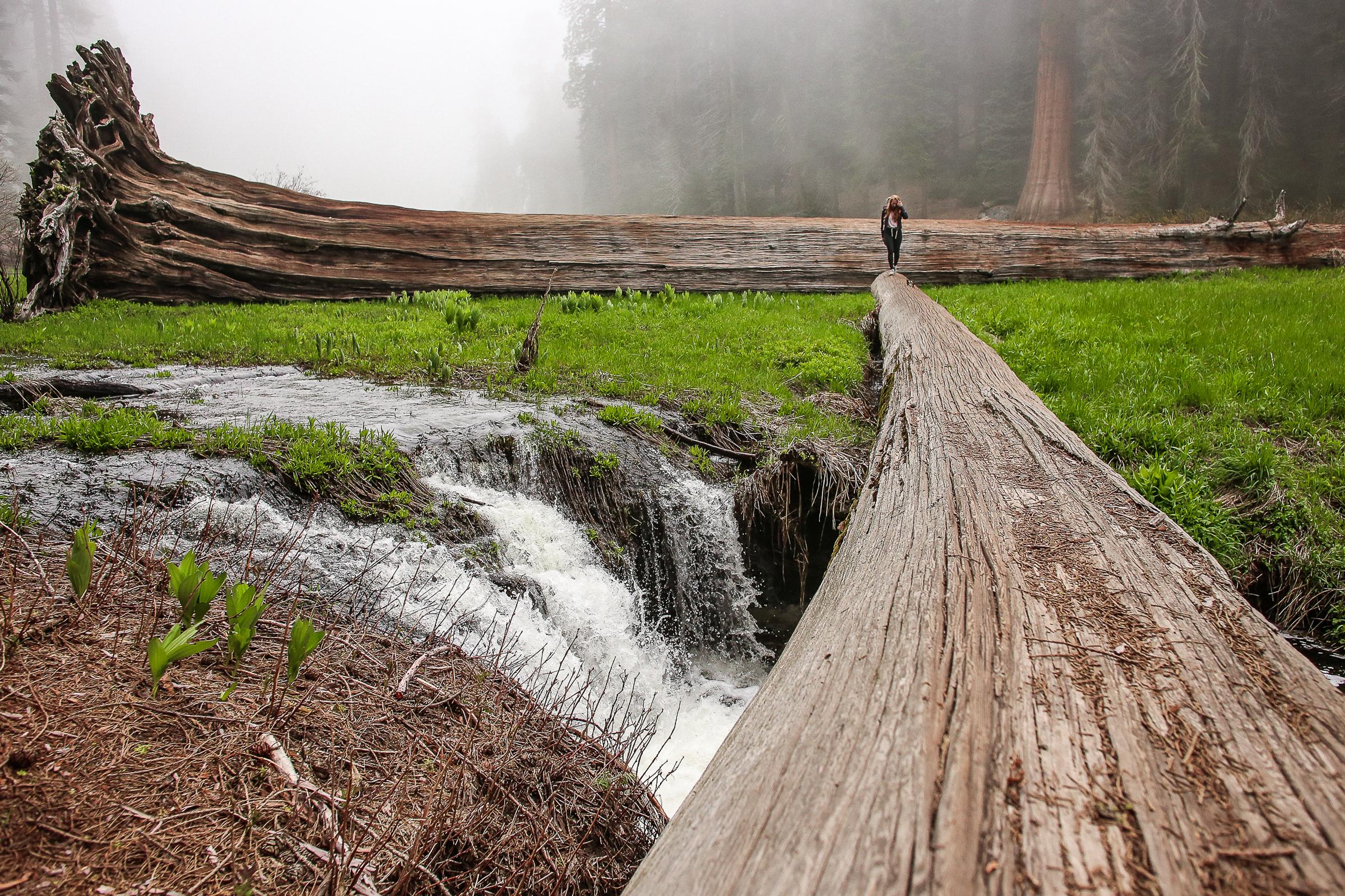 Sequoia_May2017-8474.jpg