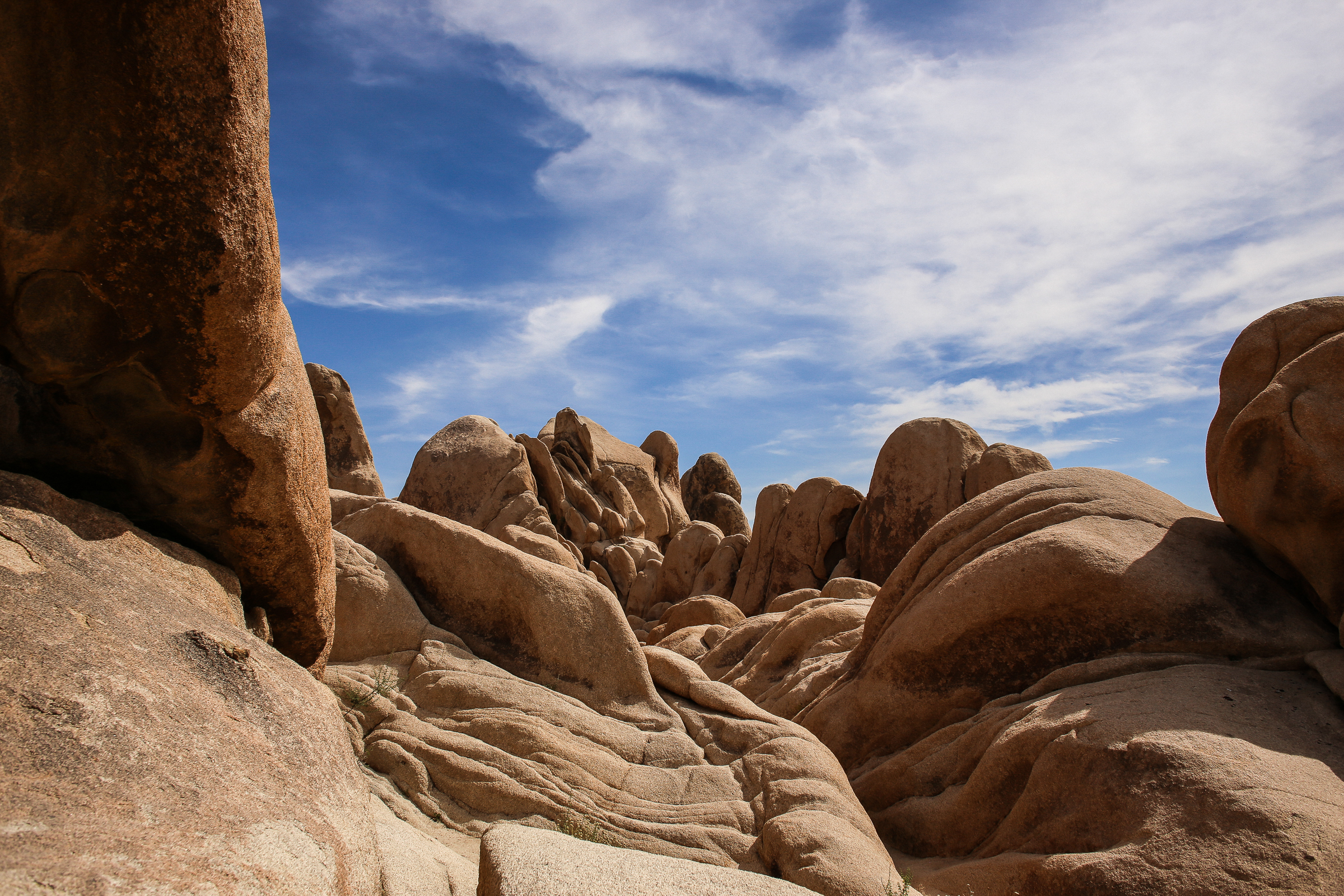 JoshuaTree_June2017-5277.jpg