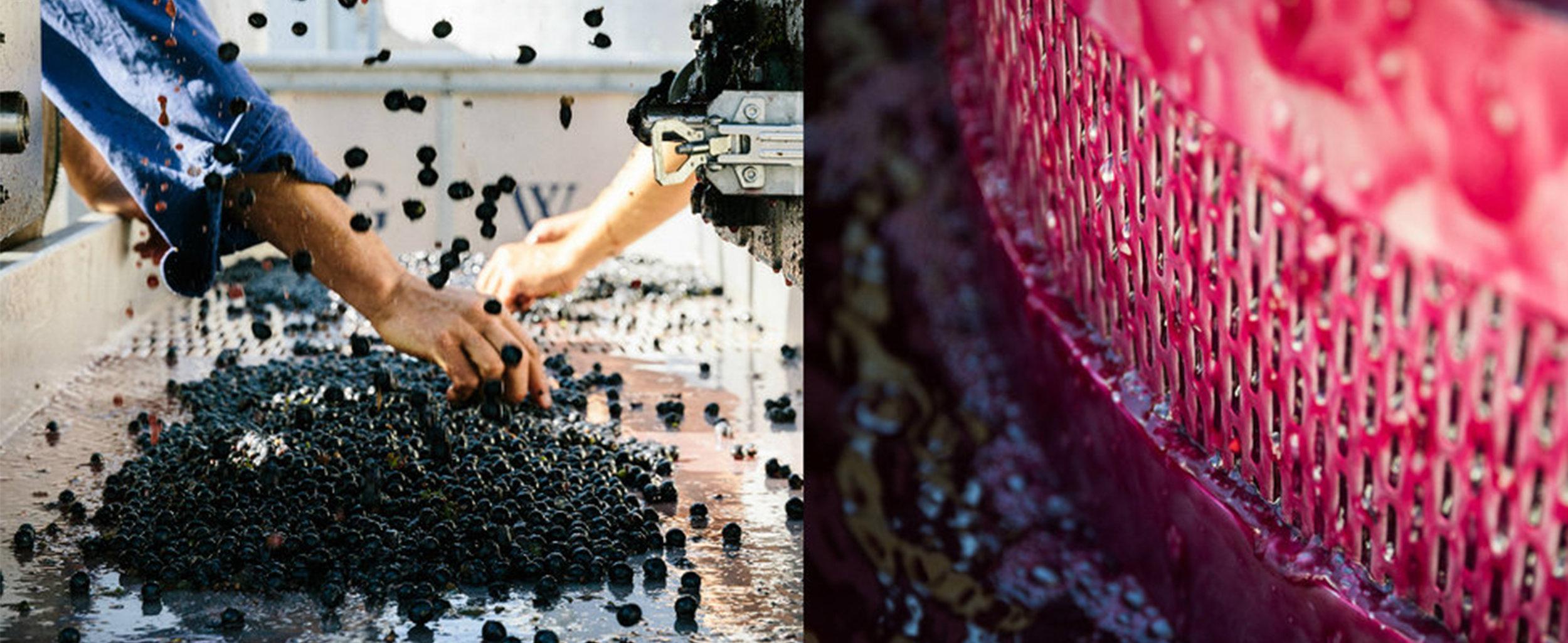 Wine making photo.jpg