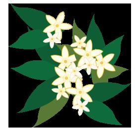citrus blossom.png