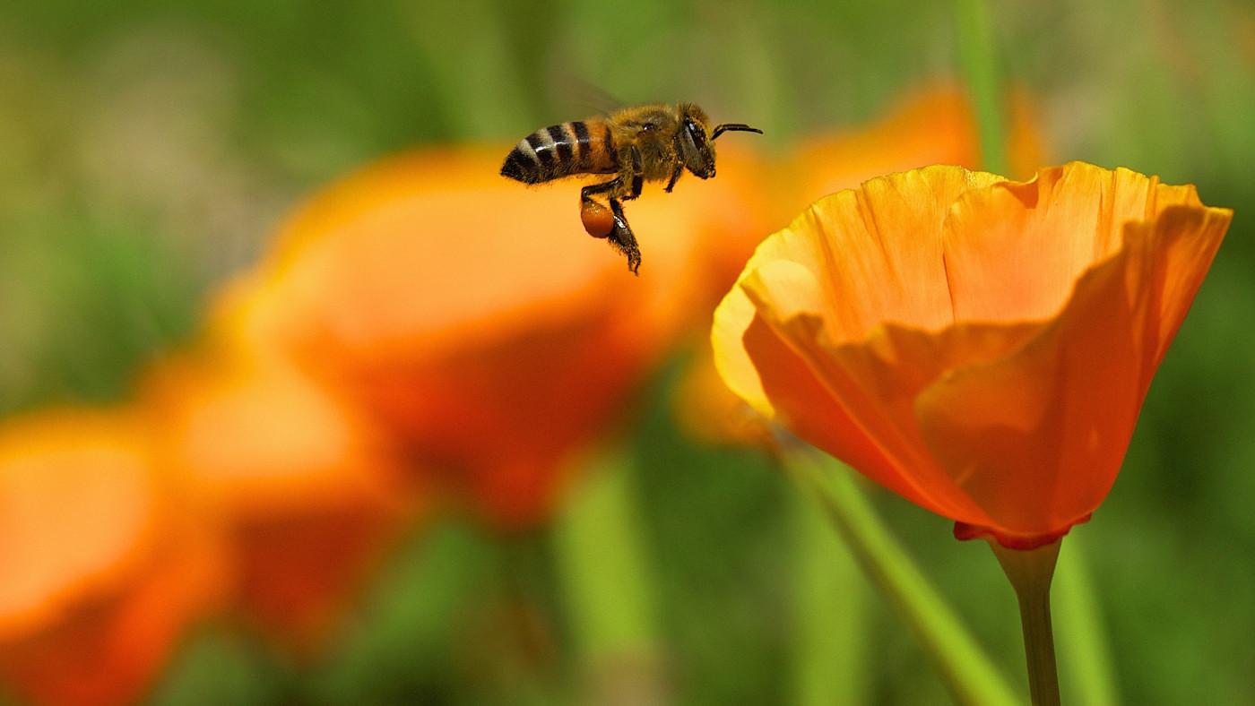 Gift 12 Prescott bee-flower.jpg