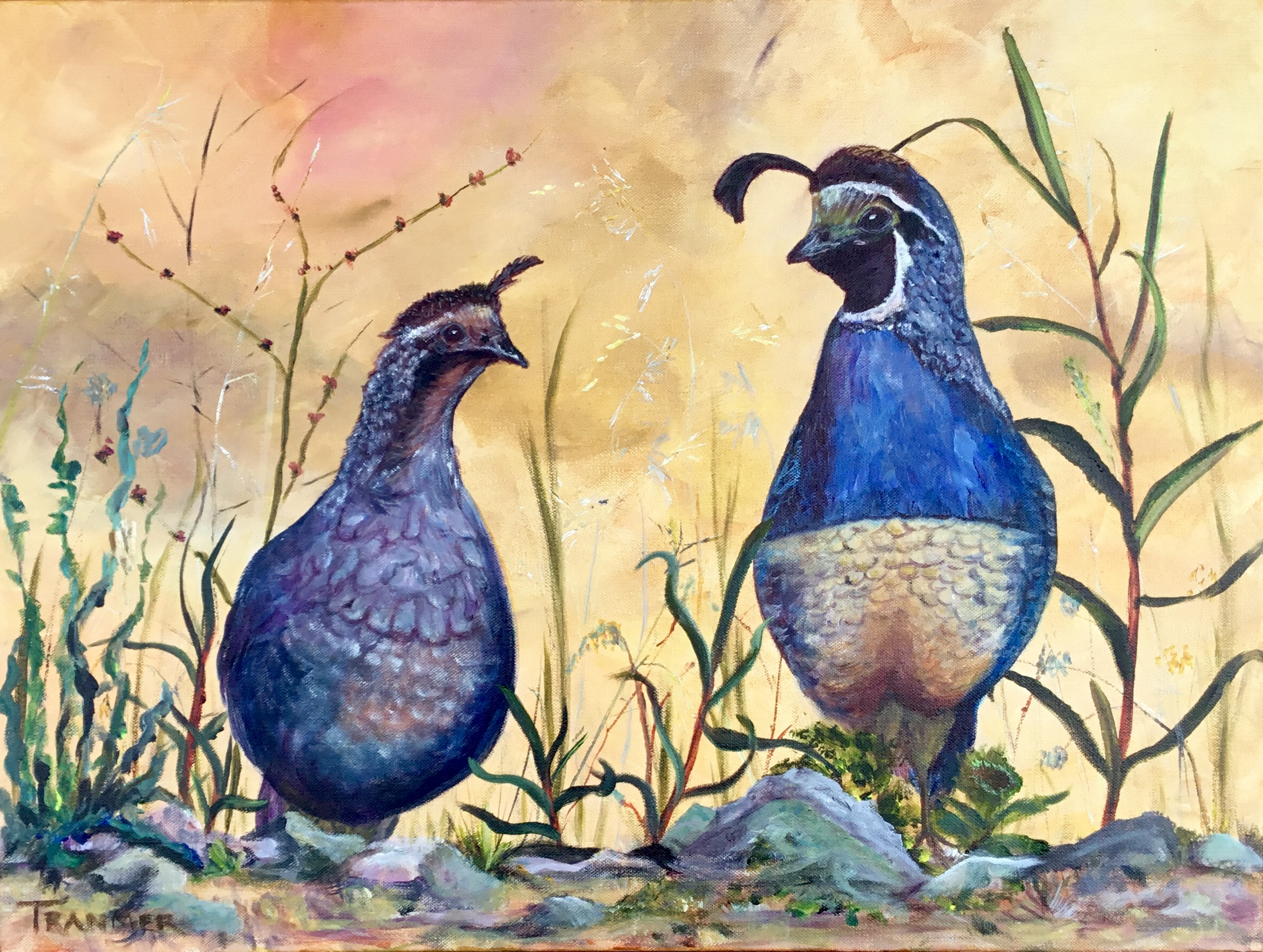 "California Quail 18""x 24"" 1.5  SOLD"