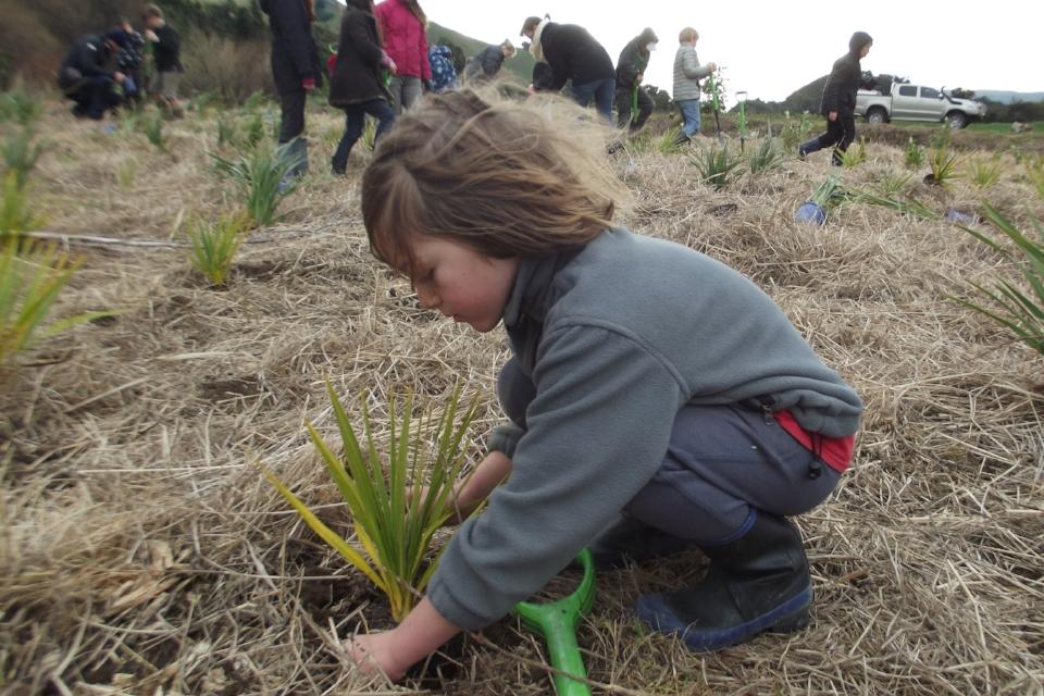 hira tree planting