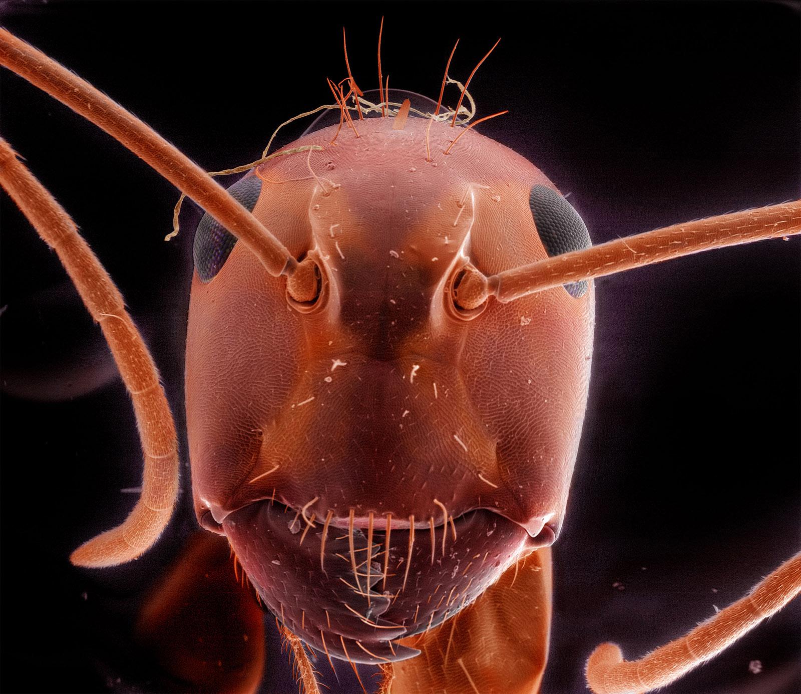 Back Yard Porch, September 12th [Red Carpenter Ant], 2011 © Daniel Kariko