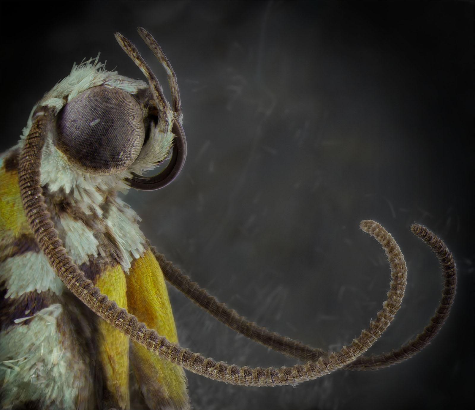 Backyard Shed Window, July 7th [Ailanthus Webworm Moth],2017 © Daniel Kariko