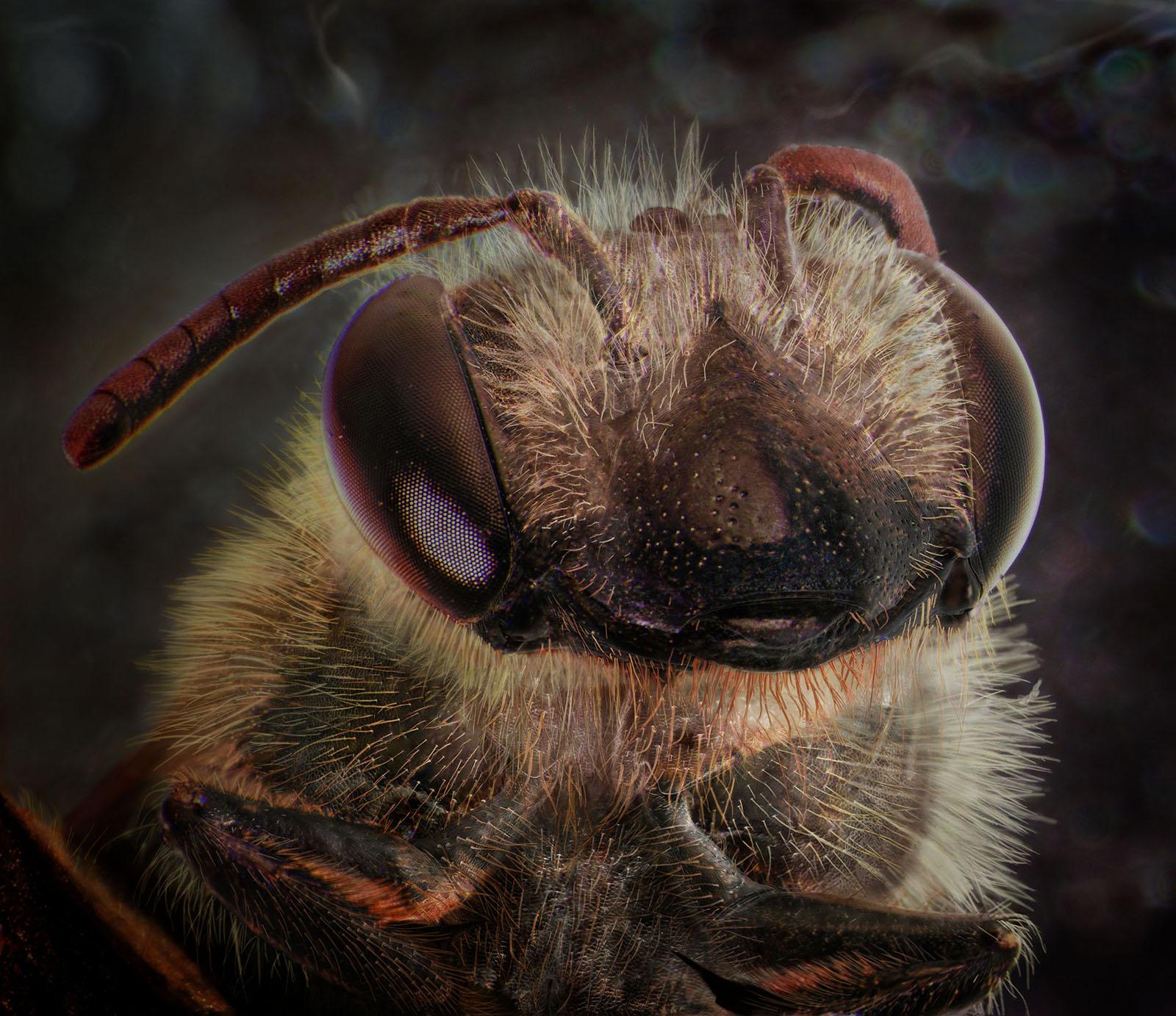 Sidewalk Crack, September 24th [Honey Bee],2015 © Daniel Kariko