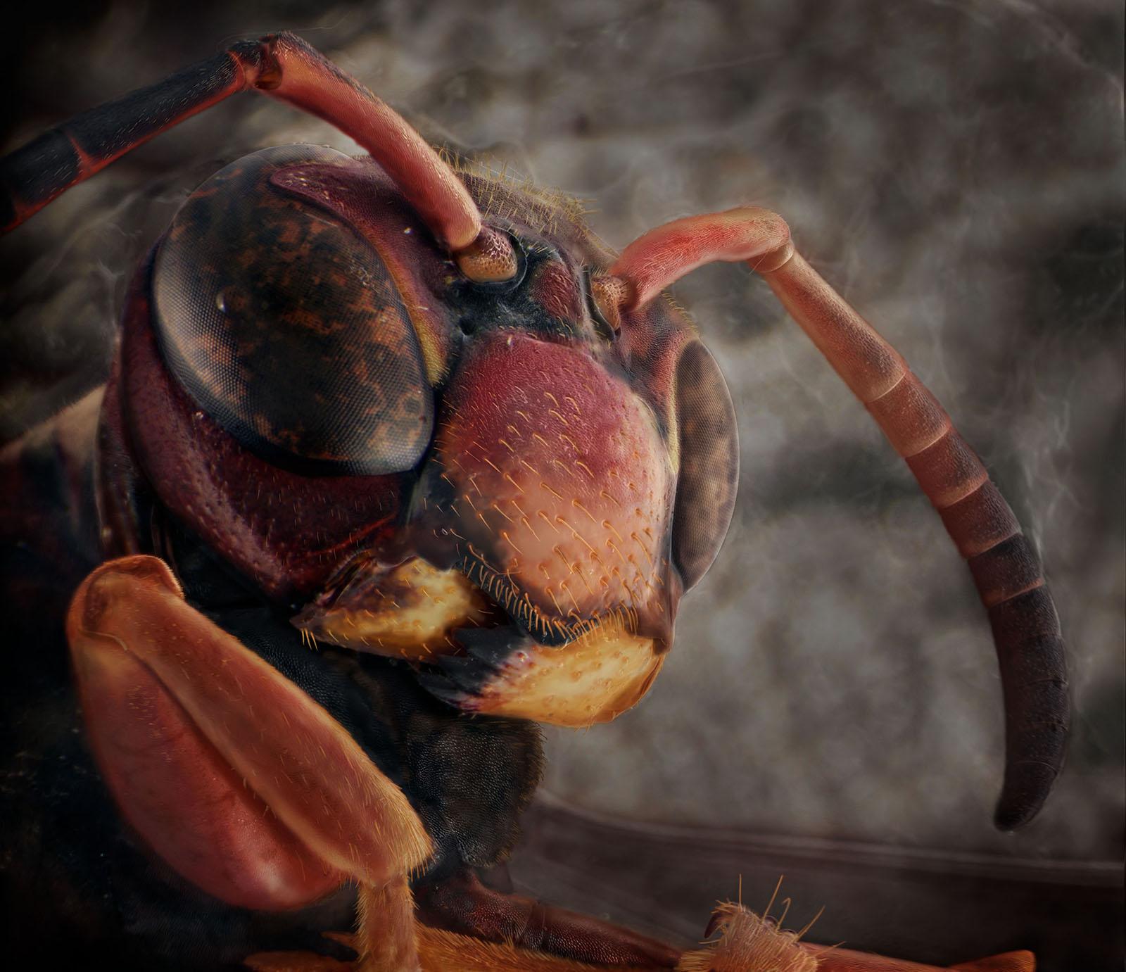Back Porch Screen Door, August 23rd [Black and Brown Paper Wasp],2014 © Daniel Kariko