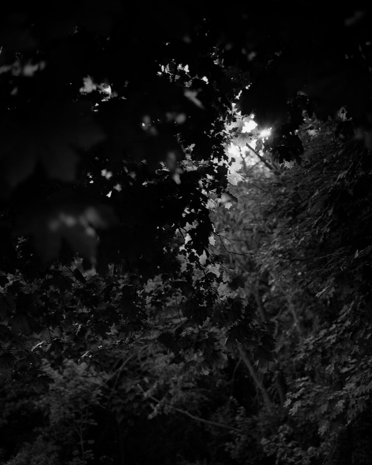 © Roger Richardson
