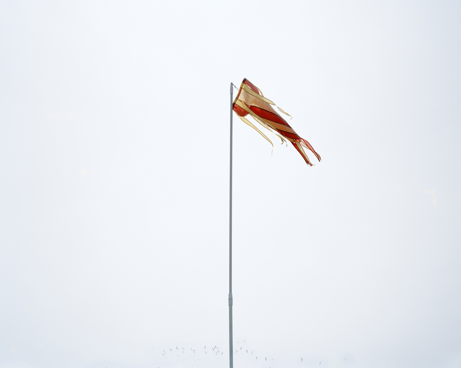 Windsock (Galveston),  2015 © Lily Brooks