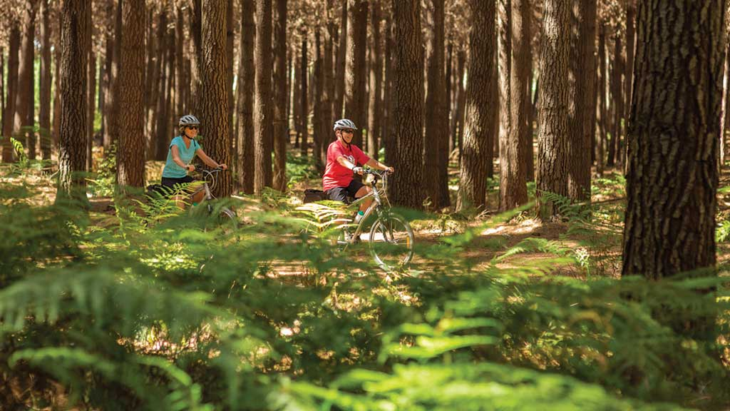Cycling along pine-shaded paths on Rabbit Island