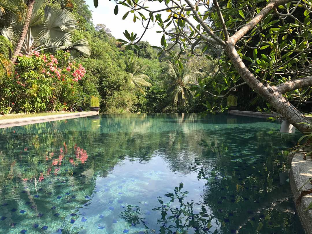 Tiger Rock's jungle poo. Pangkor island, Malaysia