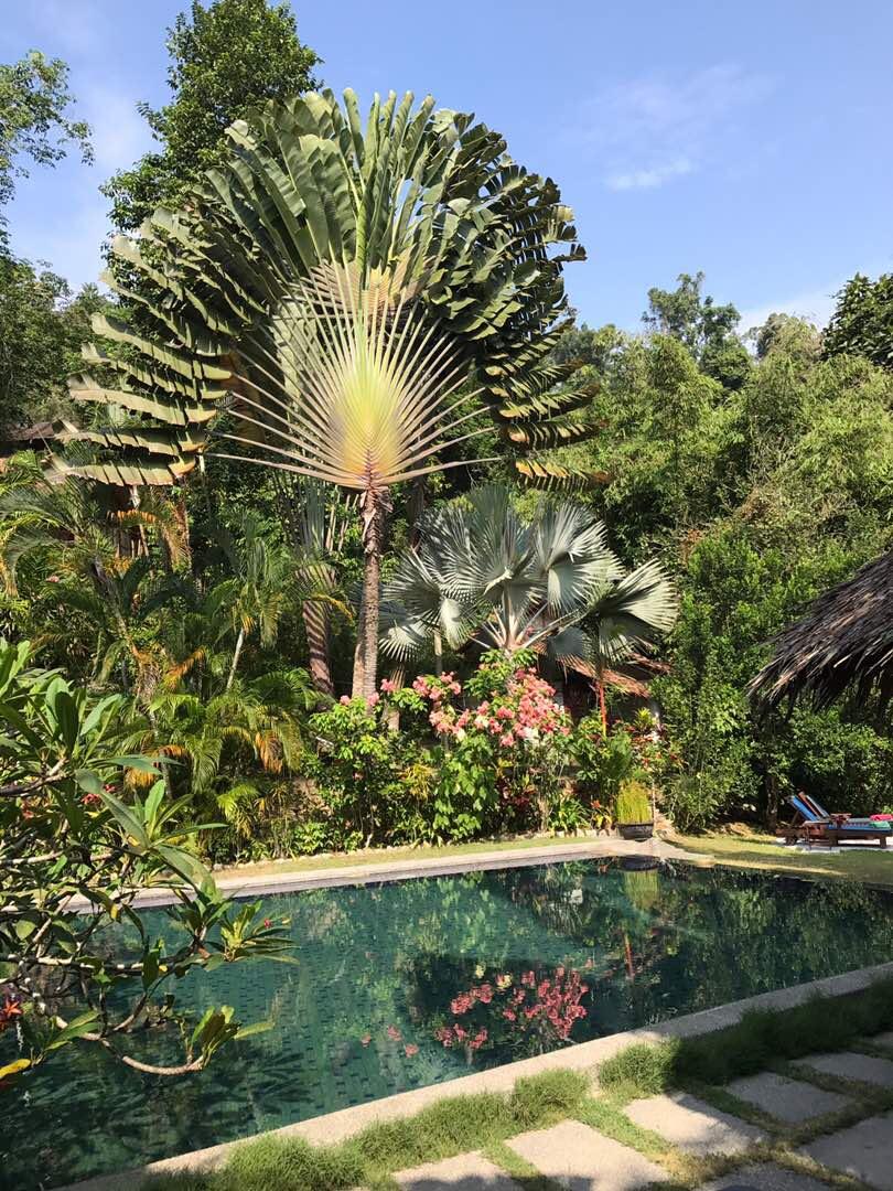 Tiger Rock's main pool. Jungle holiday