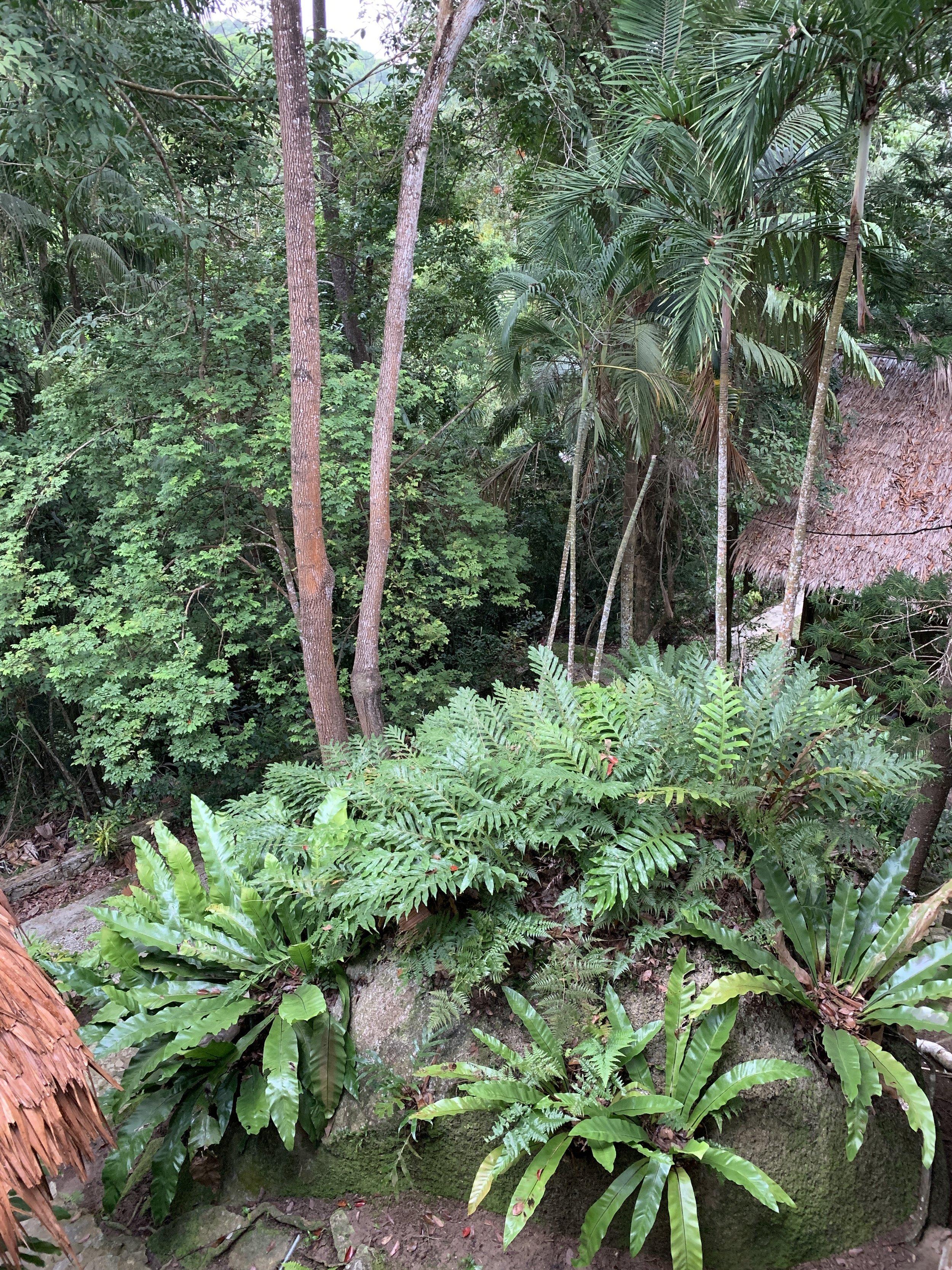 Tiger Rock. Main House. Jungle views.