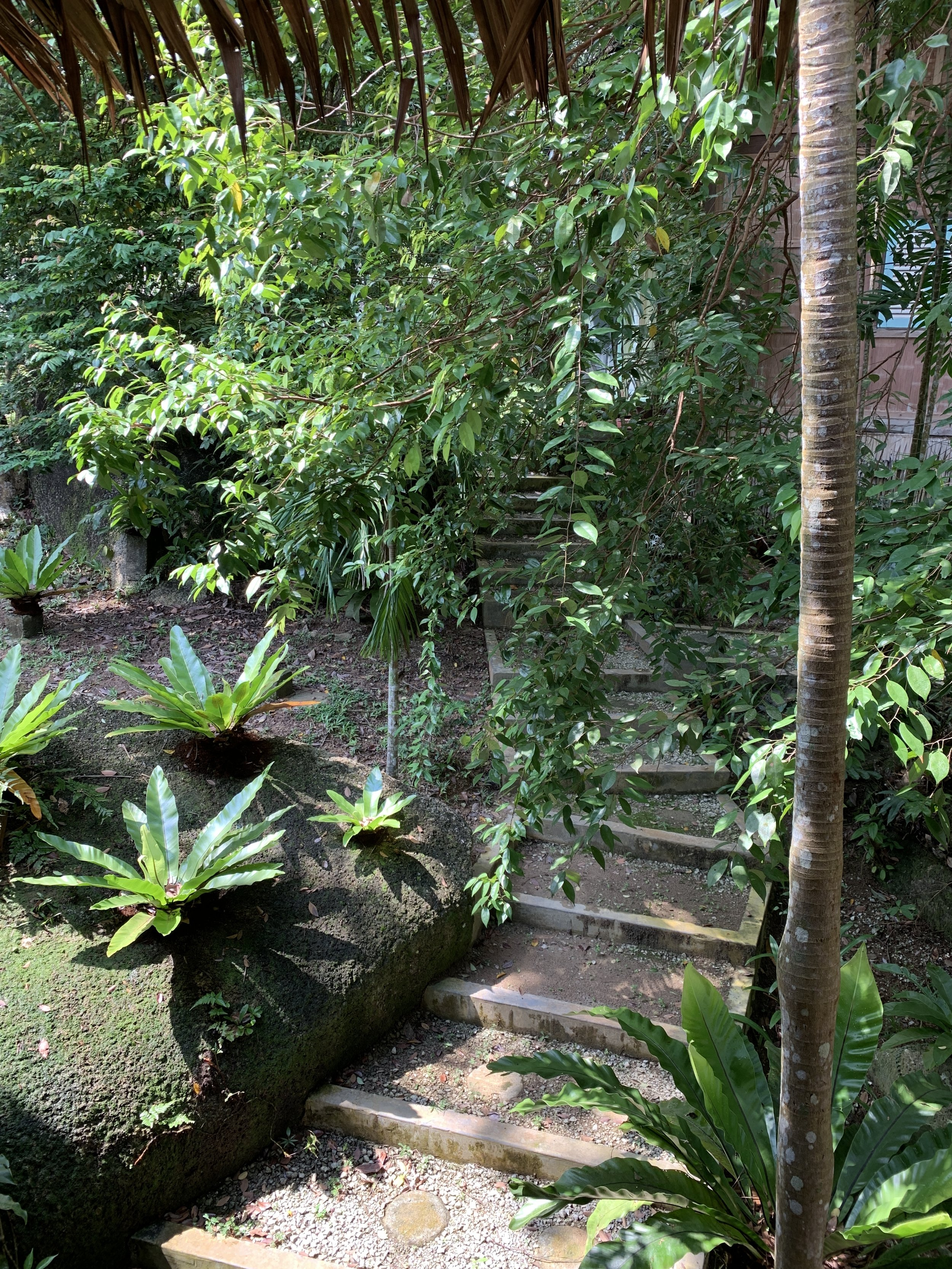 Tiger Rock. Steps to the Studio. Tropical rainforest holiday.