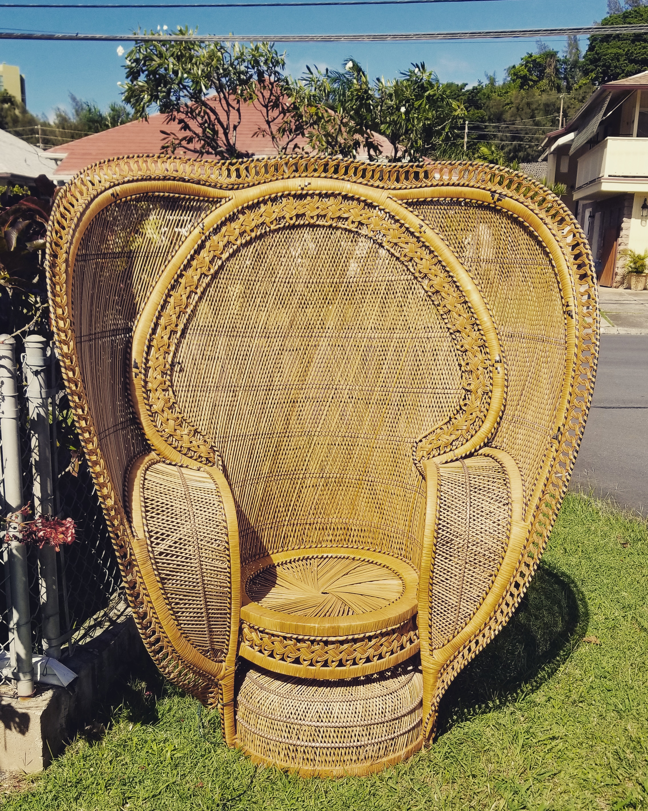 NEWLY ADDED  :  Cobra Peacock Chair