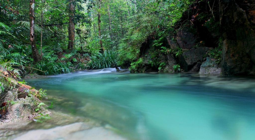 Ayer Hitam Forest Reserve -