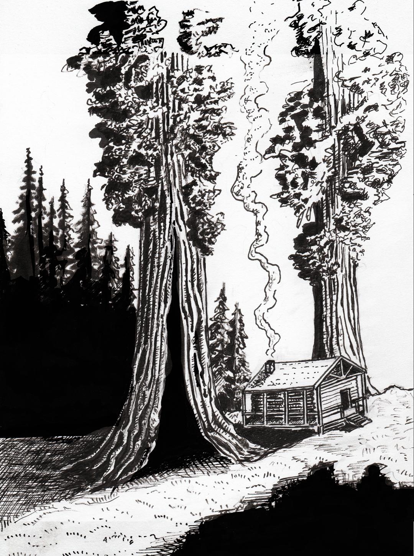 """""""Sequoia Hideout""""  //  Sketchbook  //  Ink  //  October 2017"""