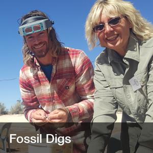 fossil_dig_widget.jpg