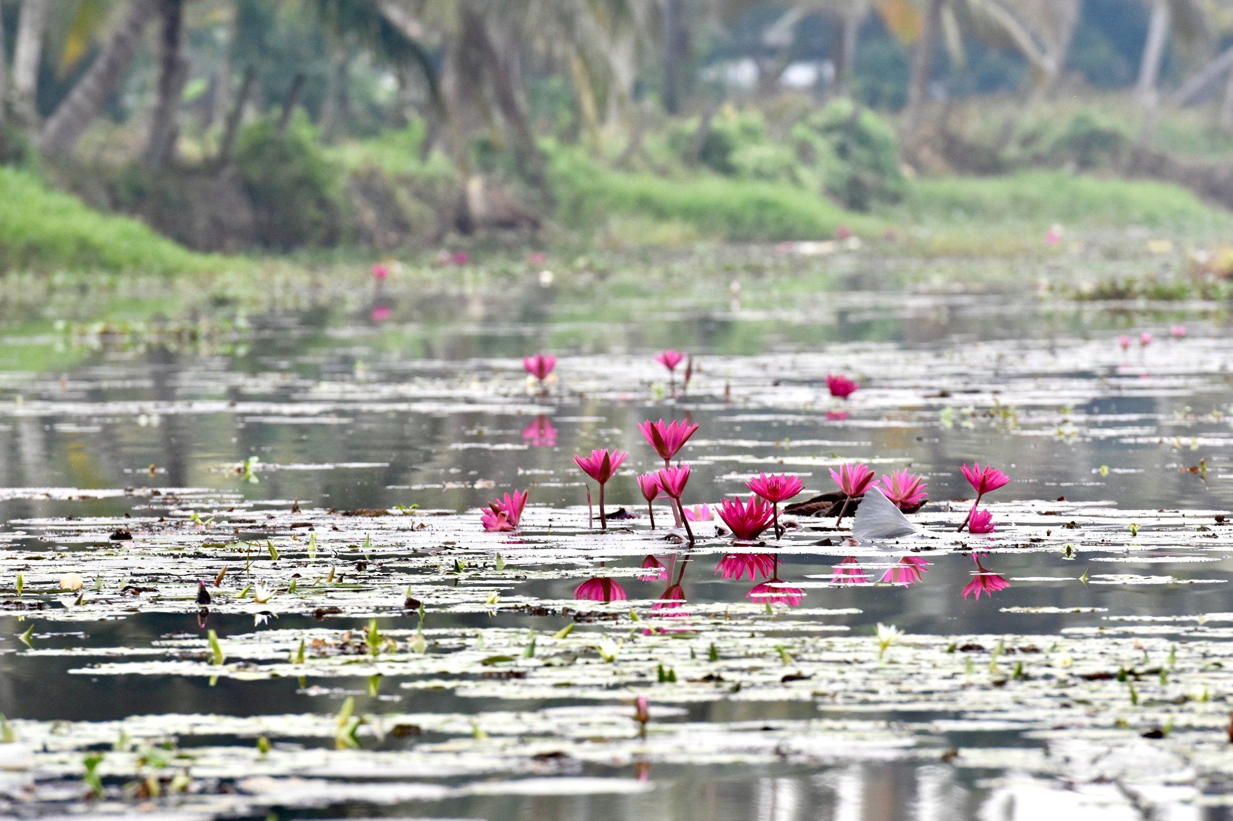 Serene Kerala 3 2.jpg