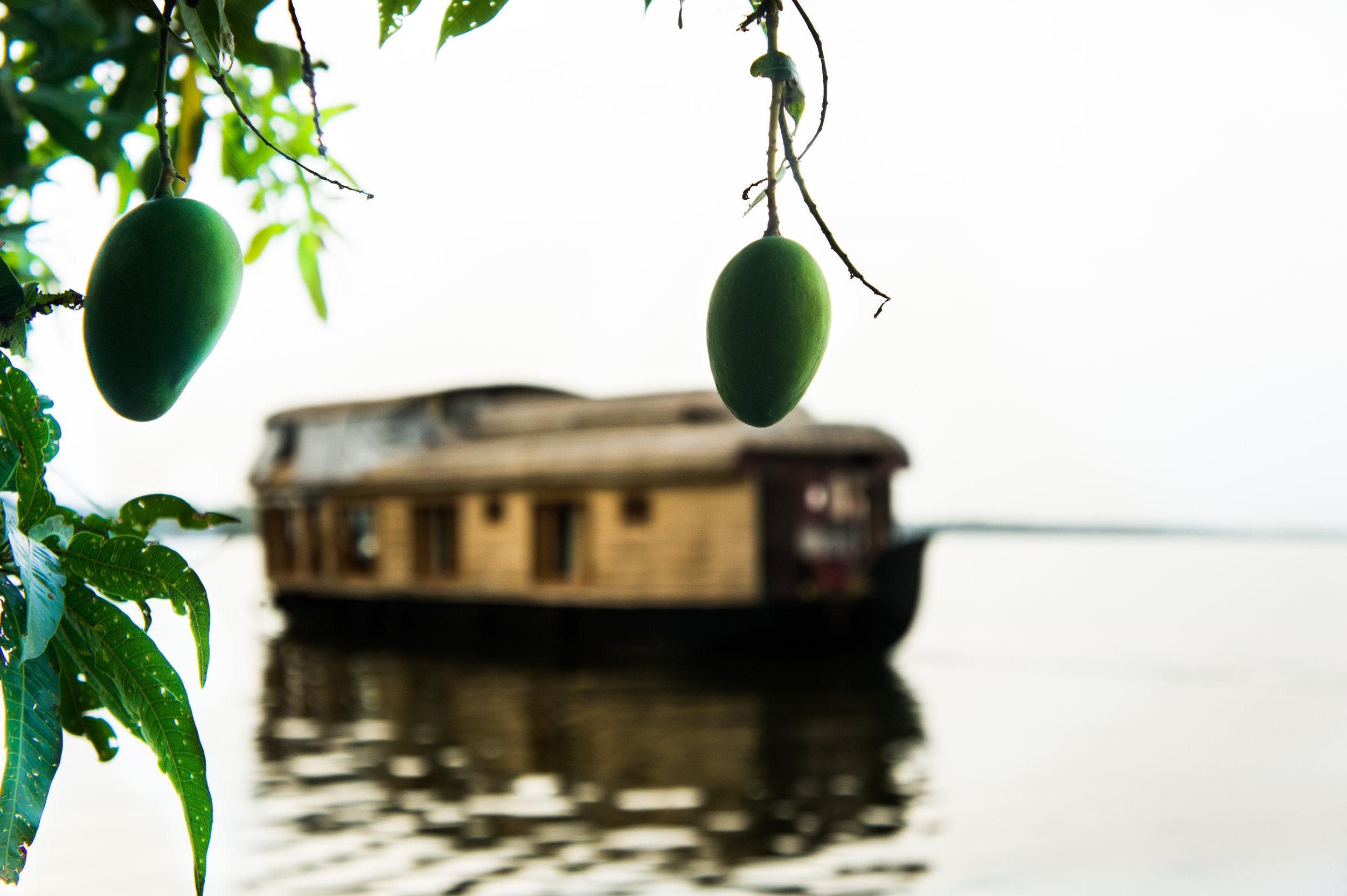 Serene Kerala 7.jpg