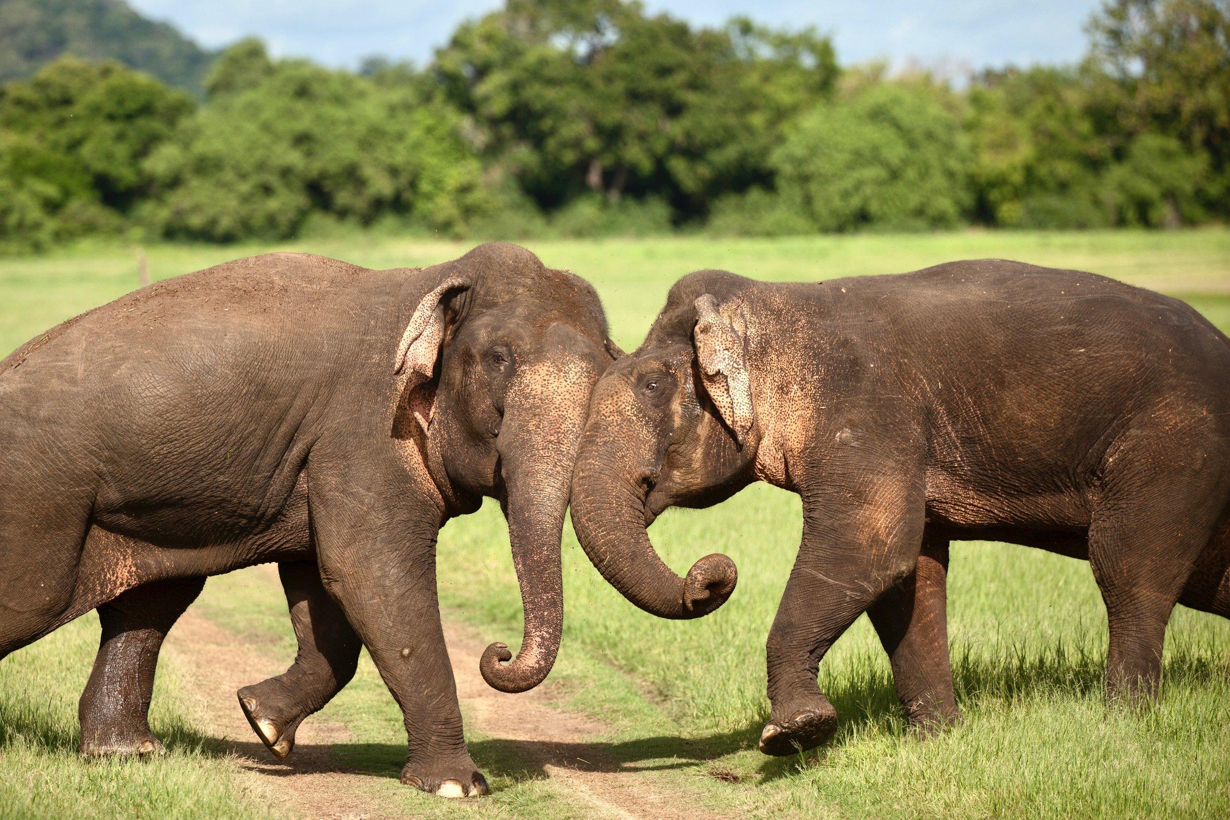 Sri Lanka 2 2.jpg
