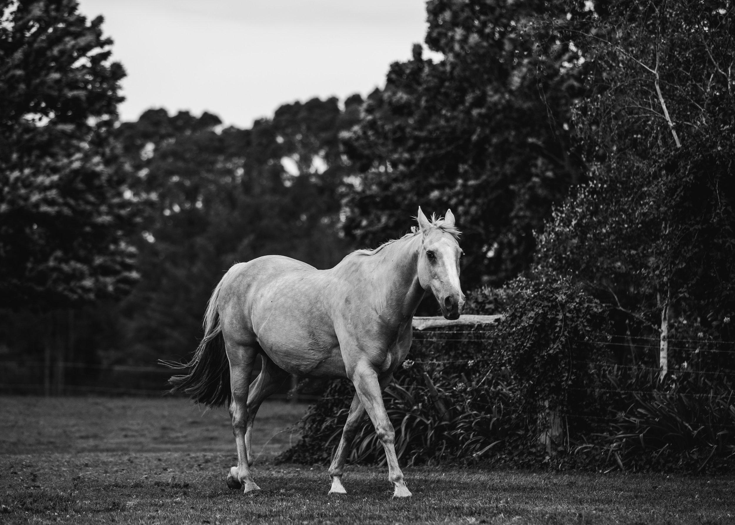 Horses-26.jpg