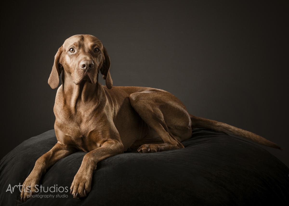 DogPhotography02.jpg
