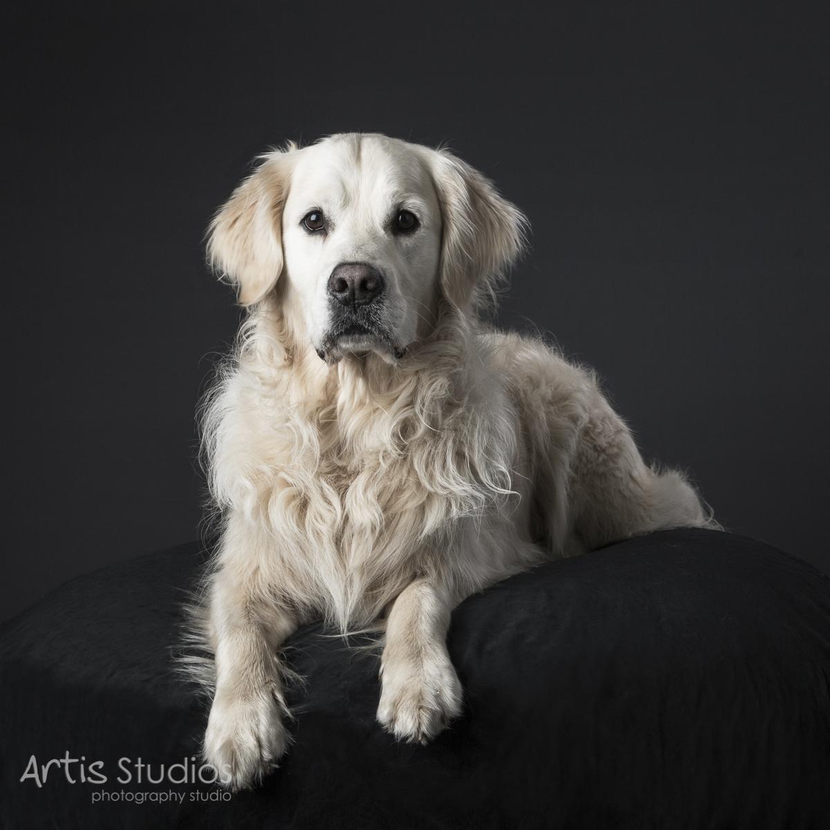 DogPhotography03.jpg