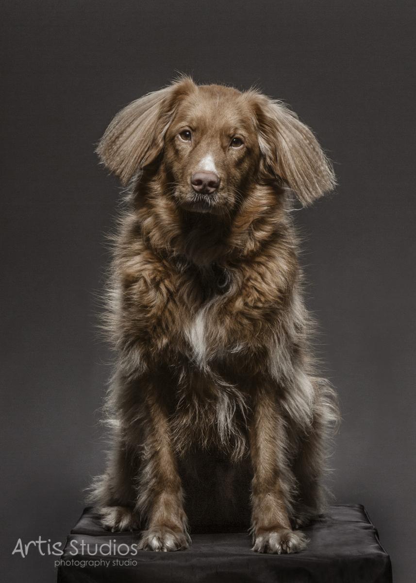 DogPhotography04.jpg
