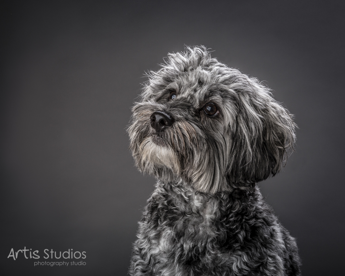DogPhotography05.jpg