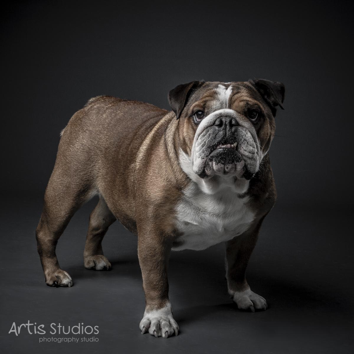 DogPhotography06.jpg