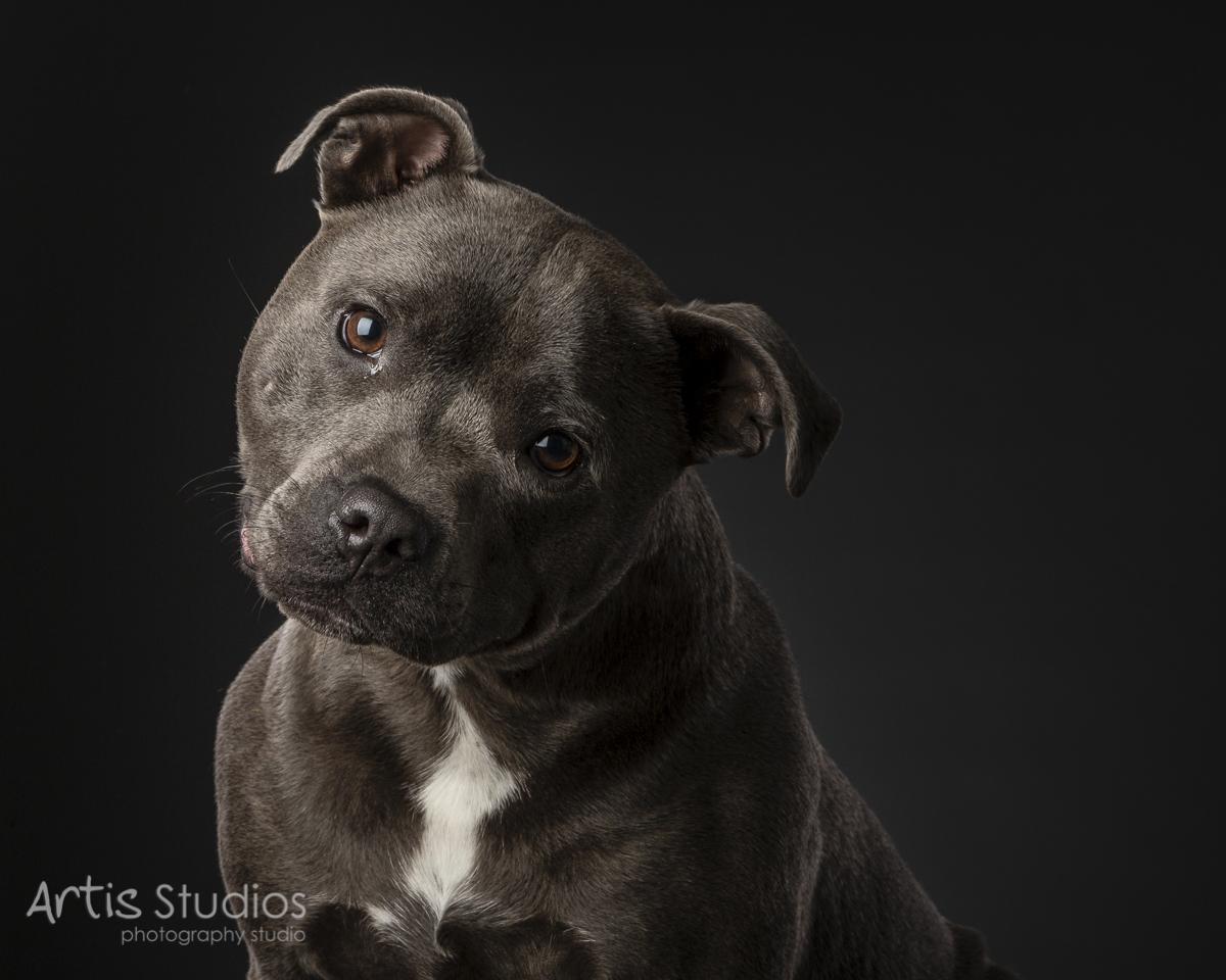 DogPhotography09.jpg