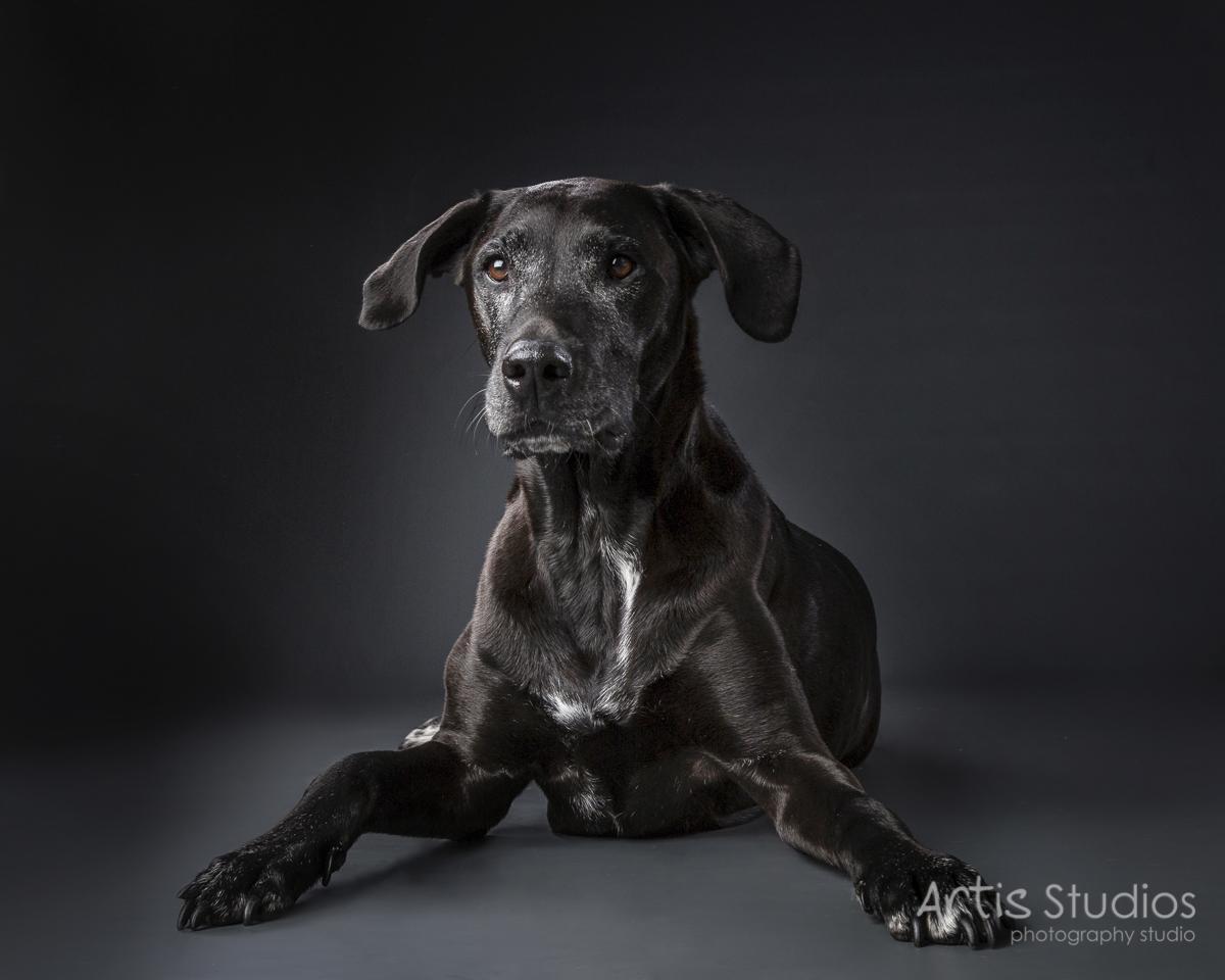 DogPhotography10.jpg