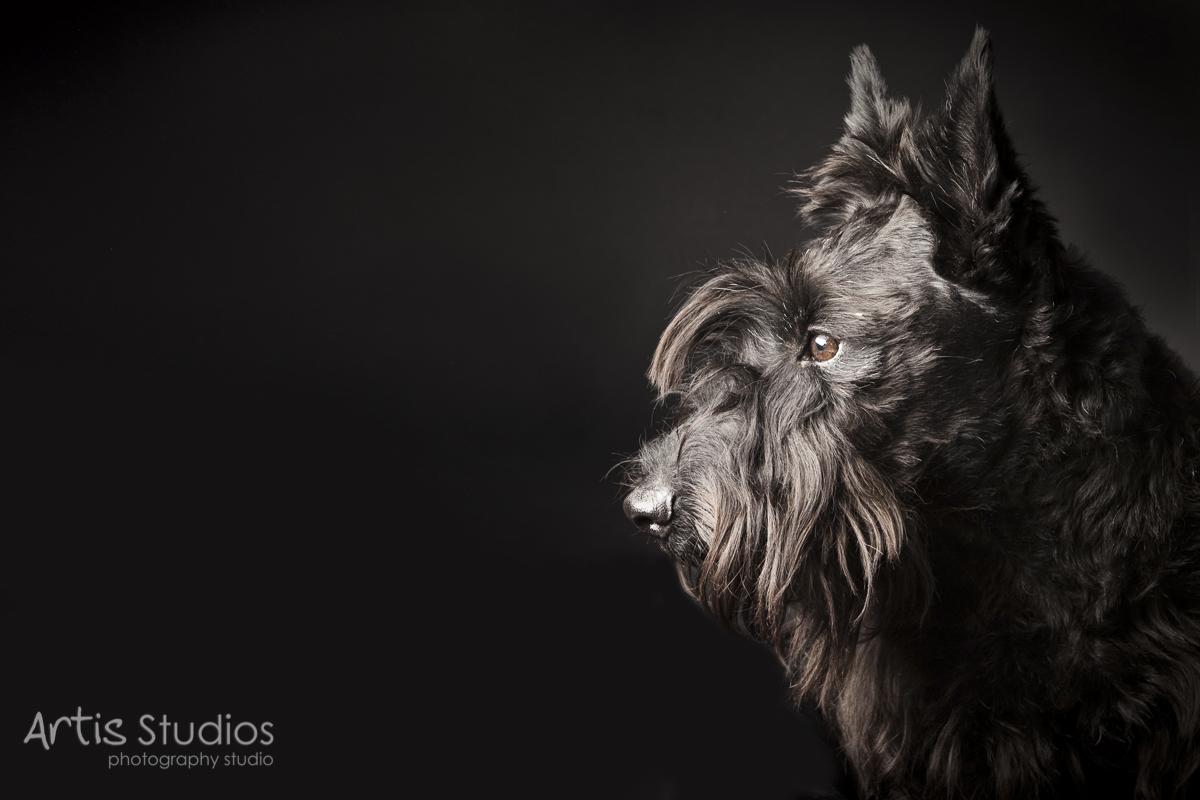 DogPhotography12.jpg