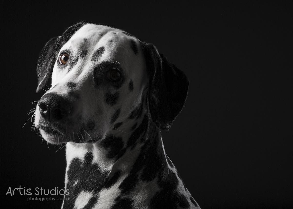 DogPhotography13.jpg