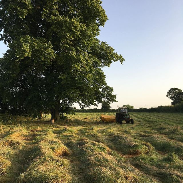 Just finished the first cut of hay for this year. Magic #goatlife #haymaking #meadow #sunset #innescheese