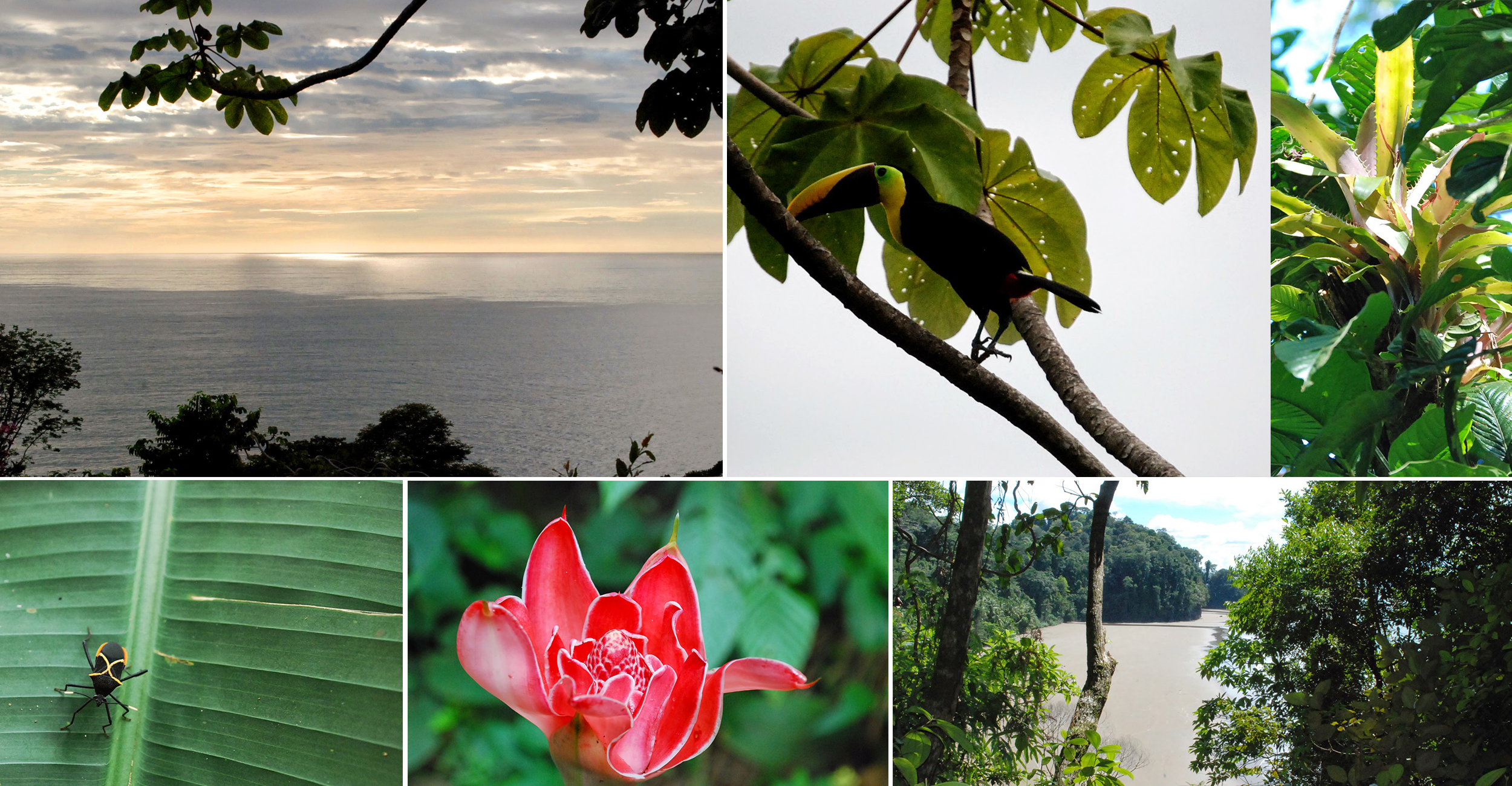 A view from  La Cusinga Eco Lodge , and some of the flora and fauna in the surrounding rainforest. All Photography: Michelle Fehler .