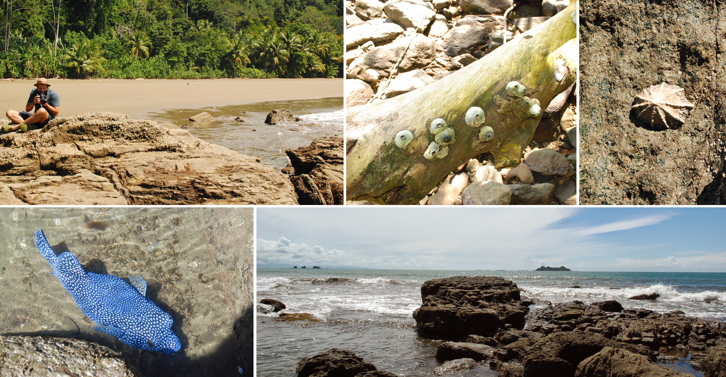 Exploring the intertidal zone, the ecosystem right at the coastline, and how the various life forms there have adapted to constantly changing water levels.