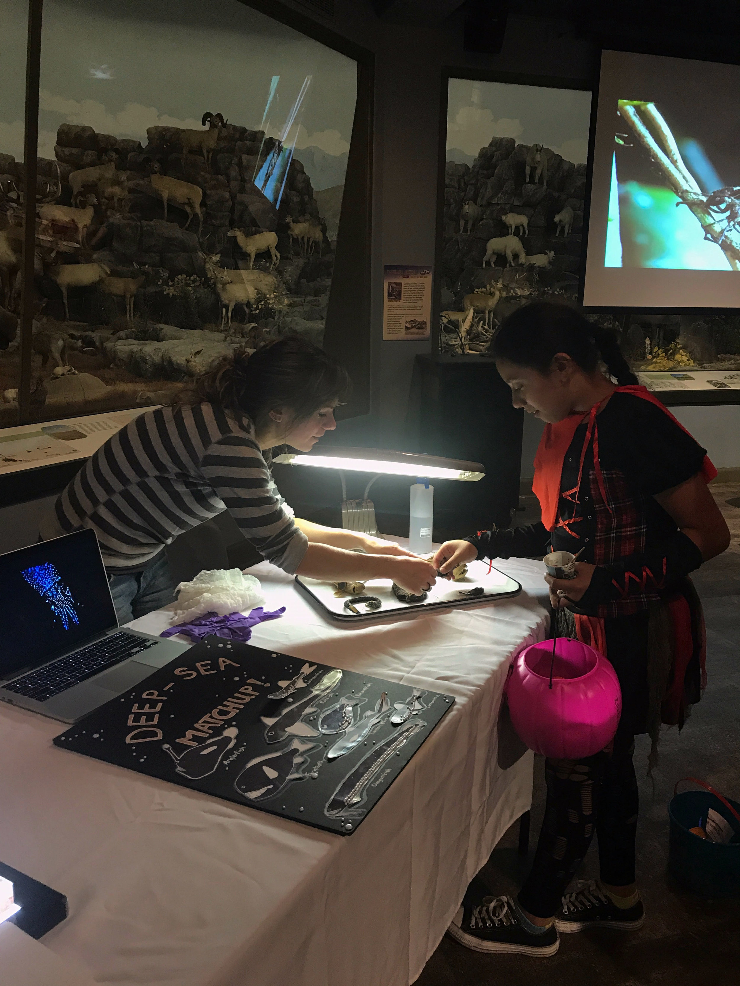 Deep-sea Fishes: Science of the Macabre at the KU Natural History Museum, October 2017