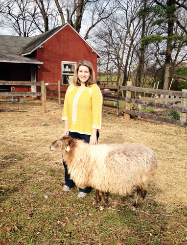 """No, that's not my sheep in the picture! That's """"Cookie"""" the Karakul sheep from Red Gate Farm, on one of my visits. Photo by Sue Bundy"""