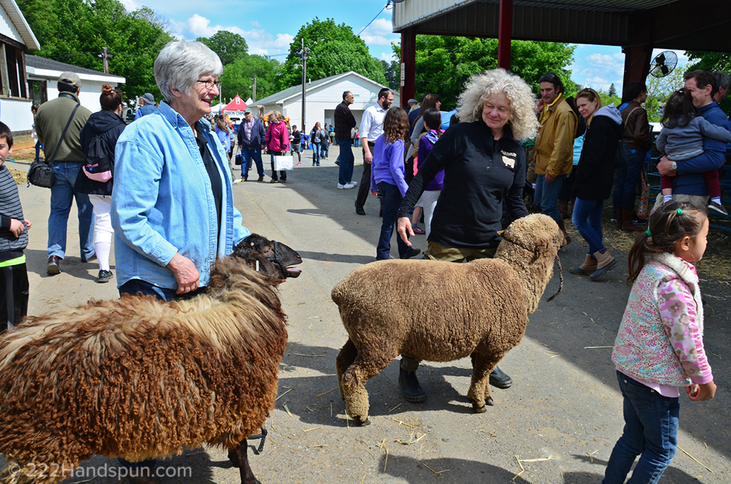 mdsw-17 Merino sheep
