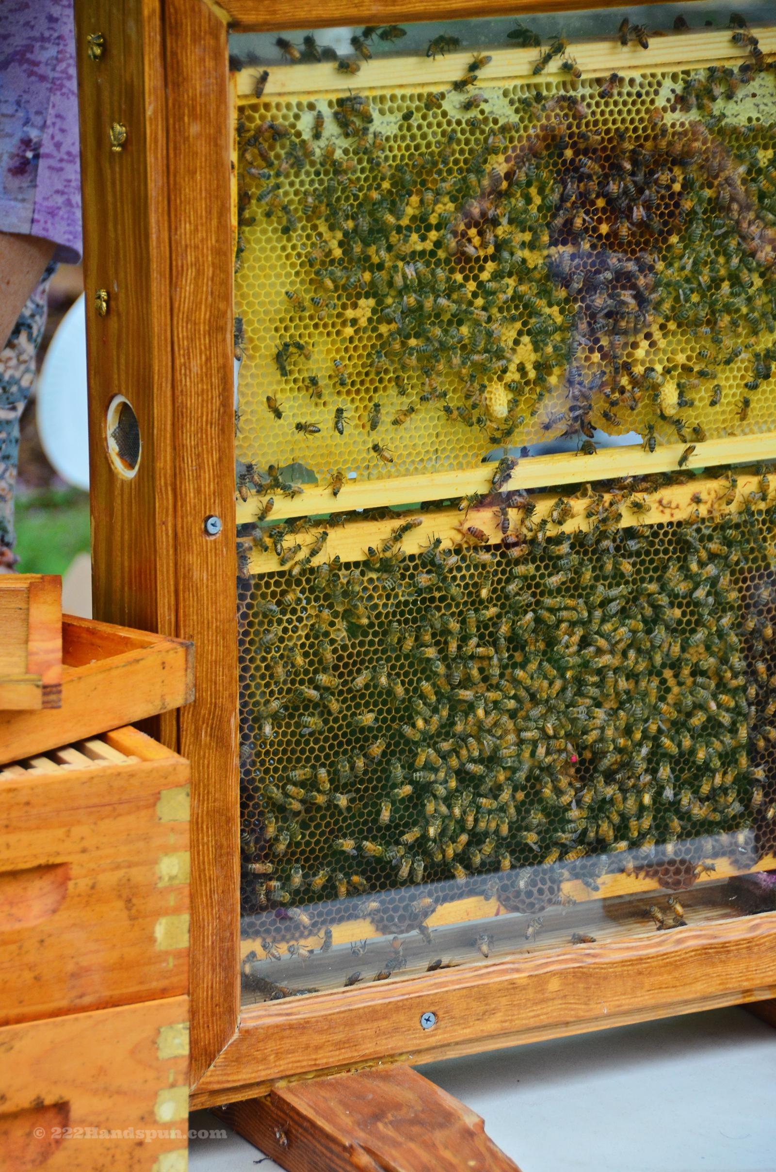 Honey Vendor at the Market