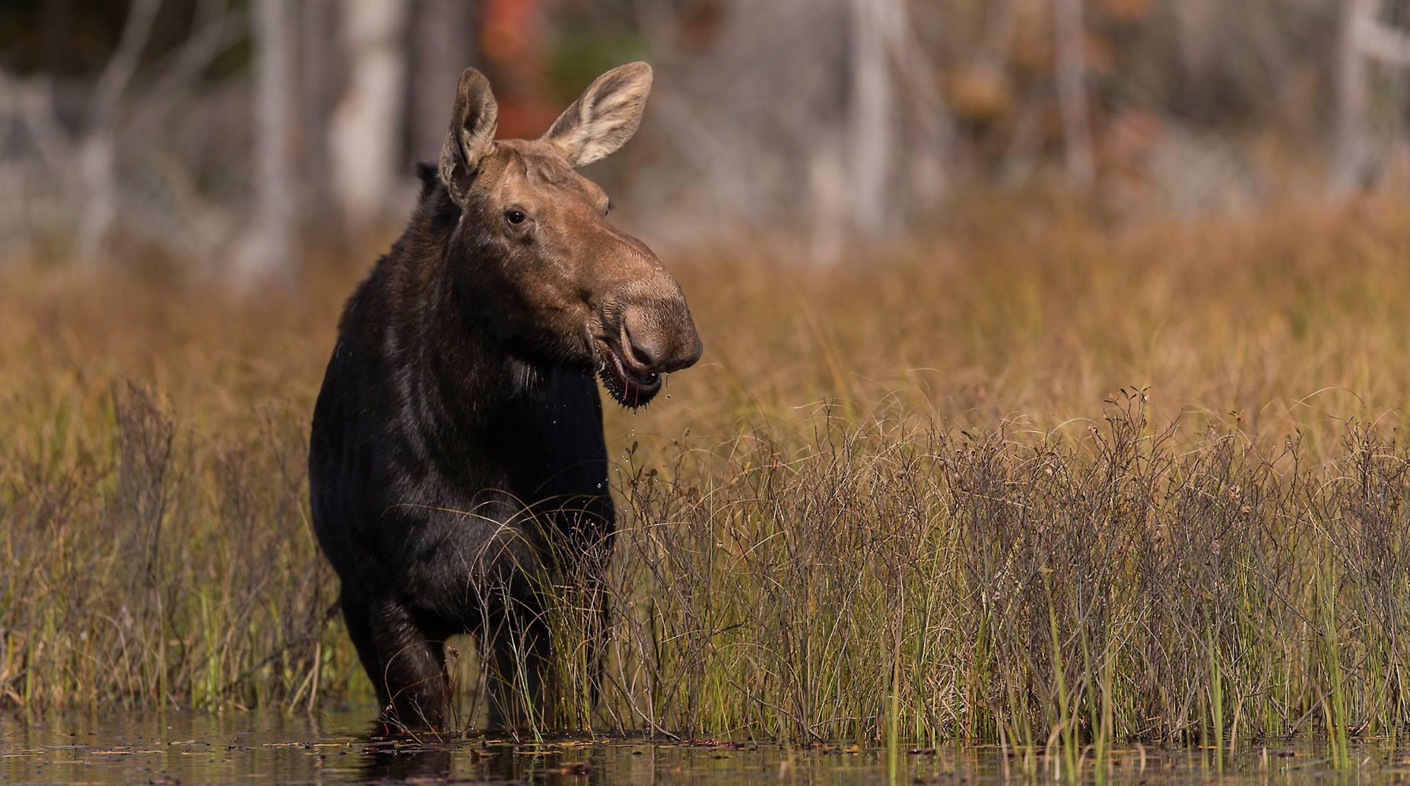 Canadian wildlife photo tours Canada