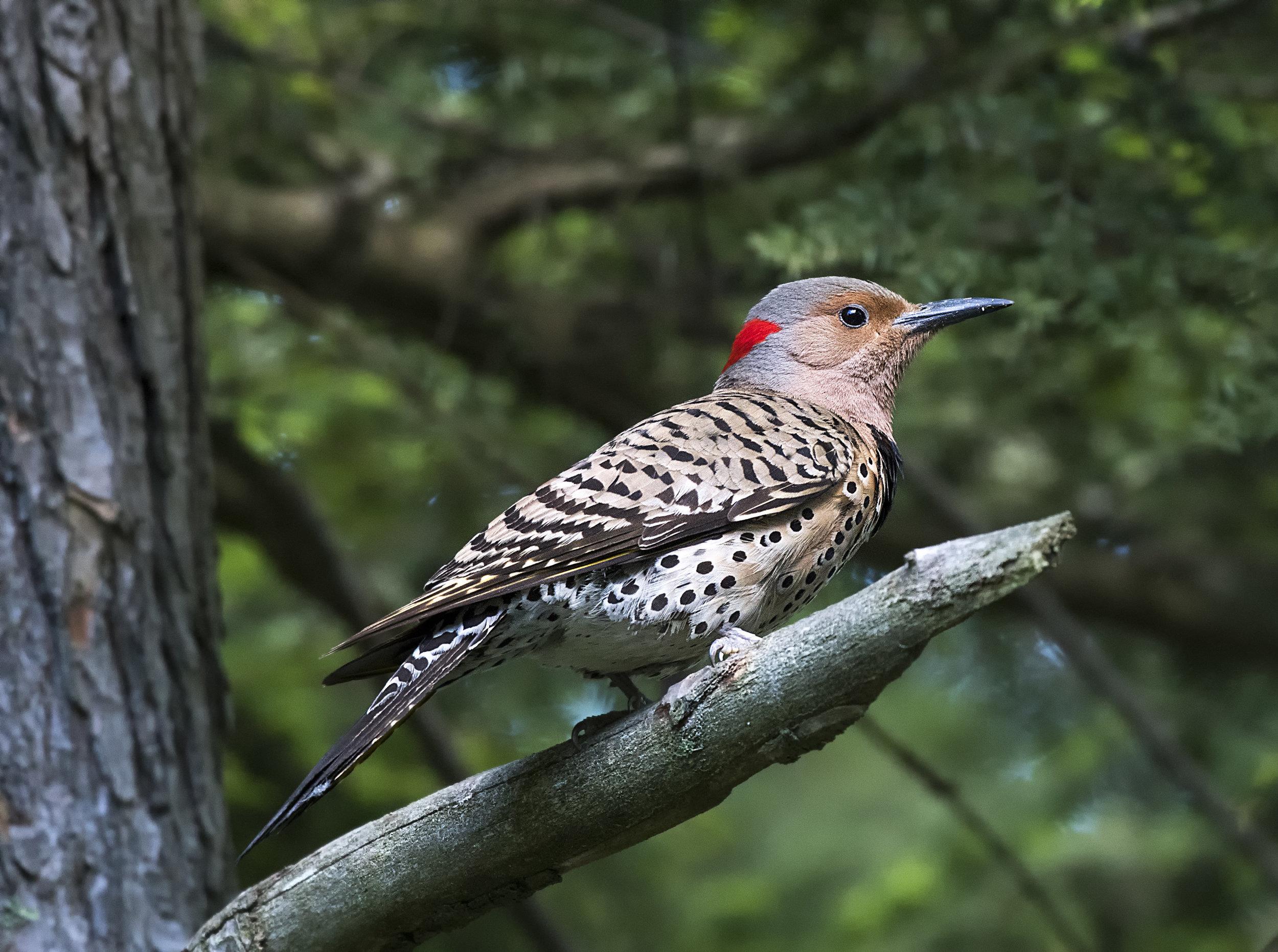 Birds of Ontario Photo workshops