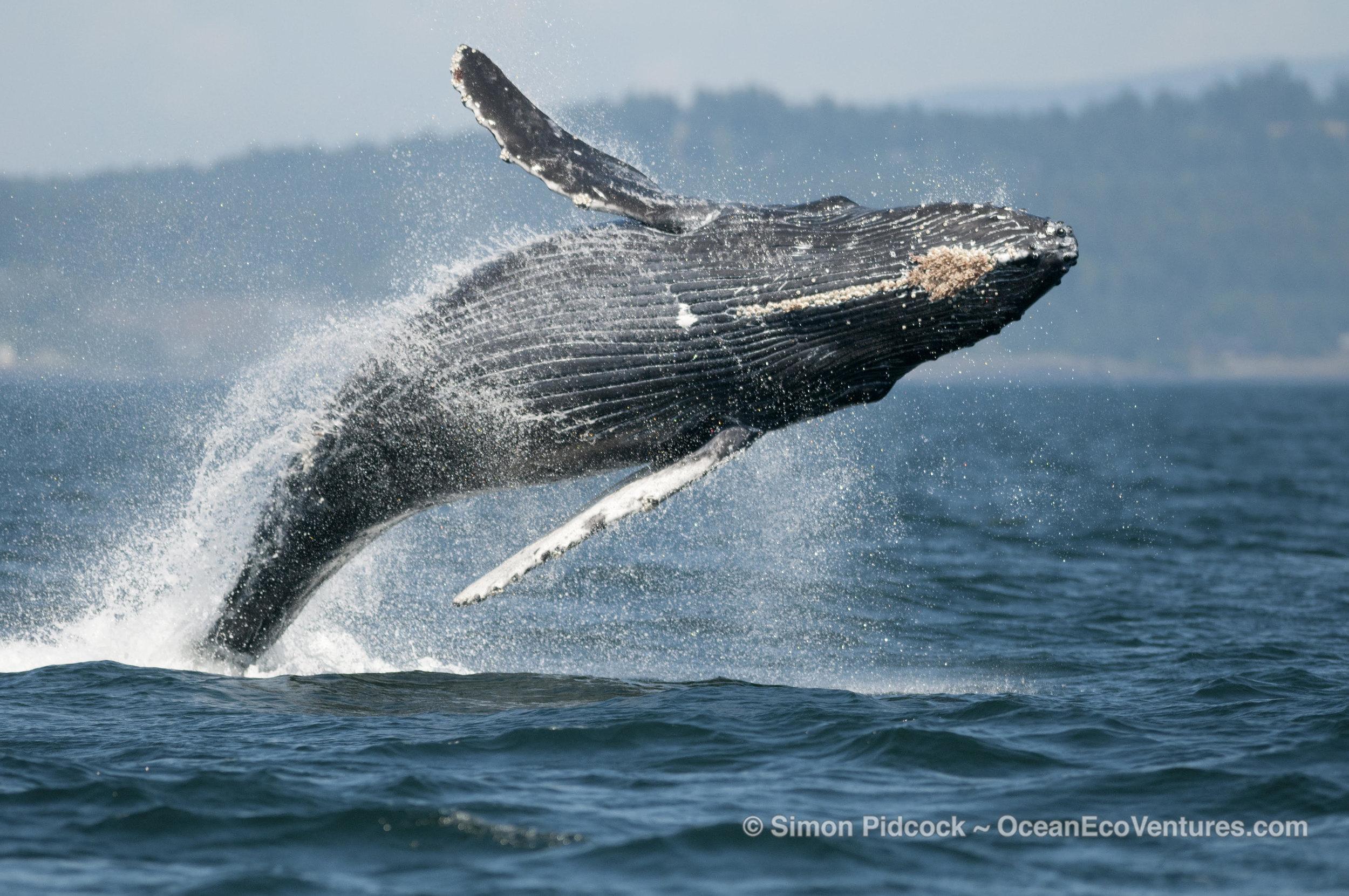 simon whale.jpg