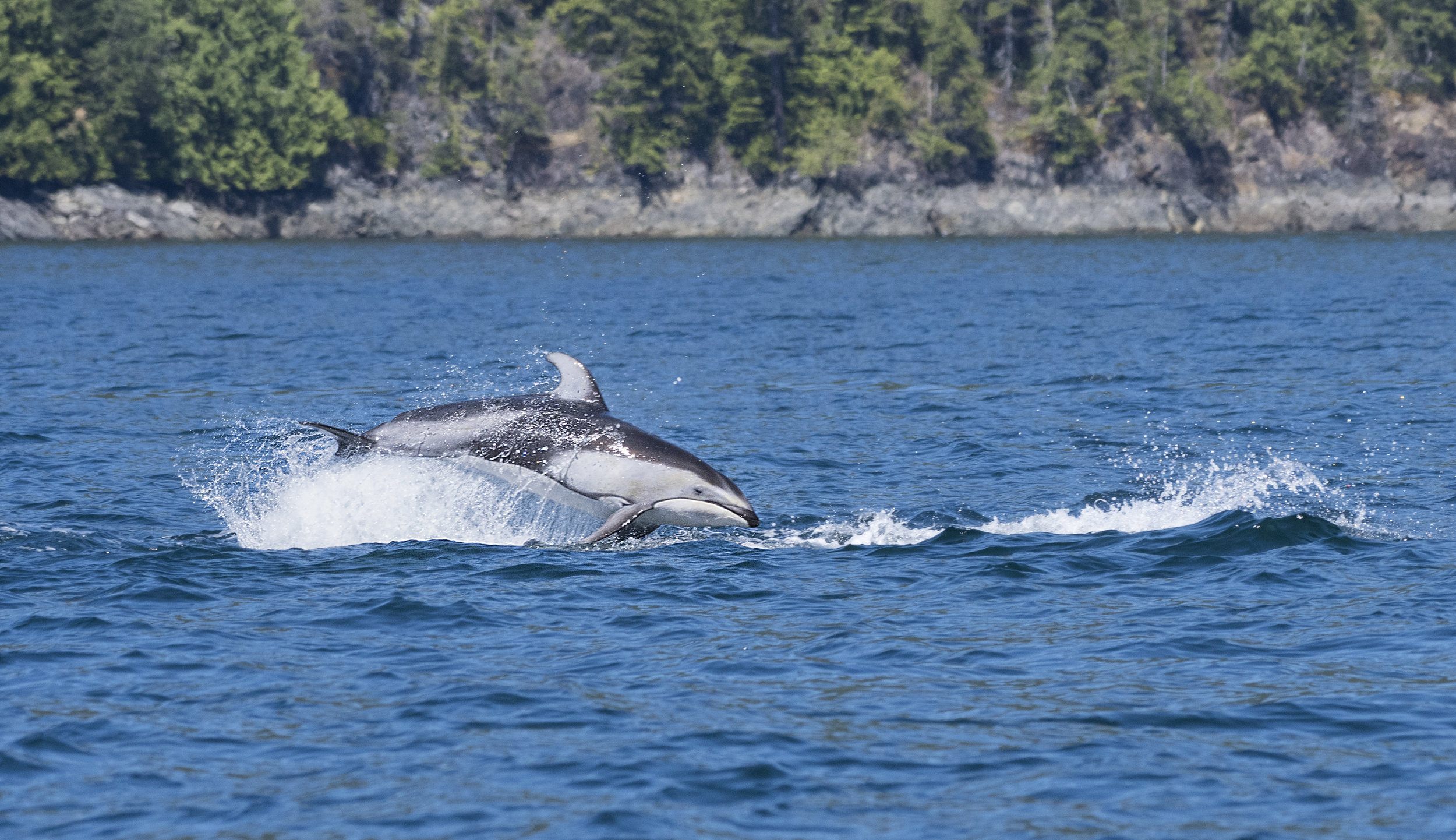Dolphin photography workshops Canada