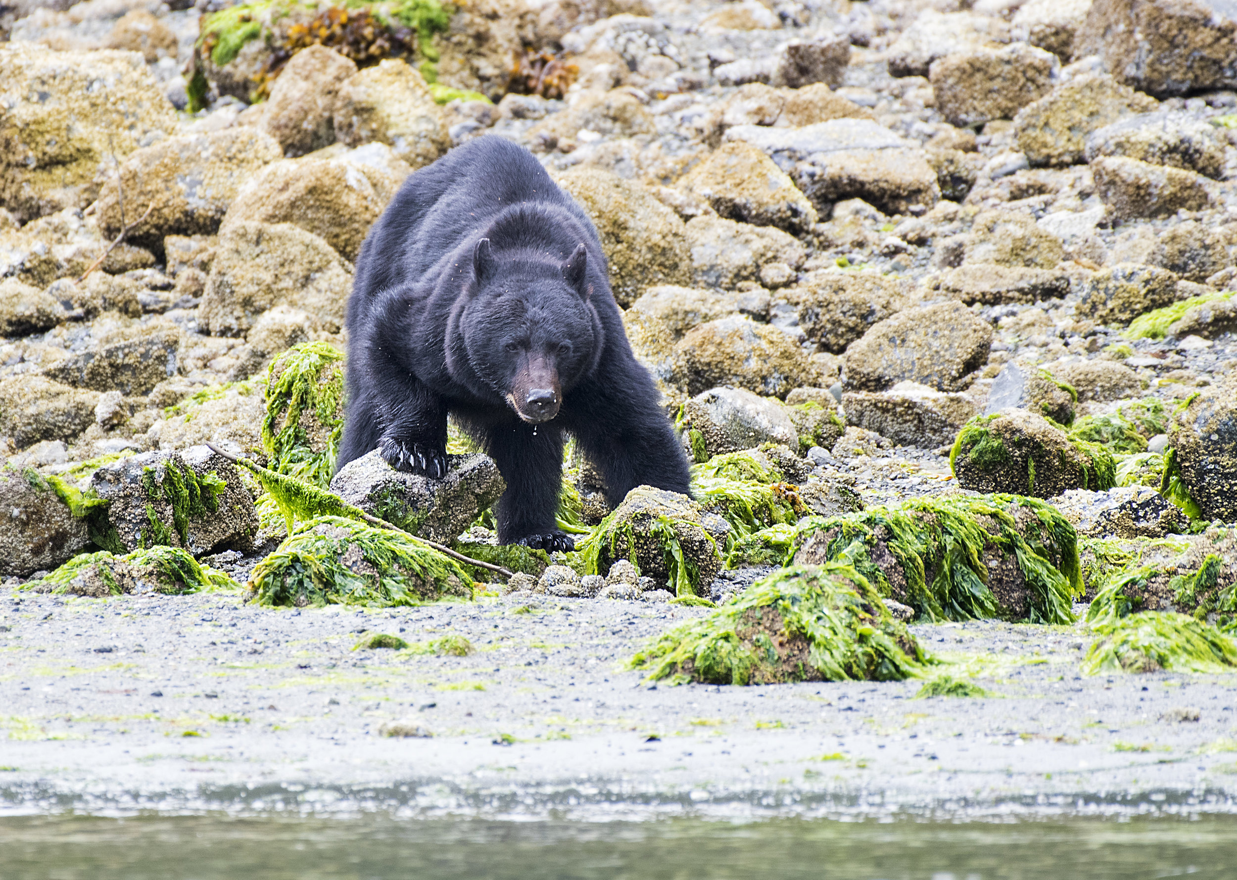 Best BC wildlife photo tours